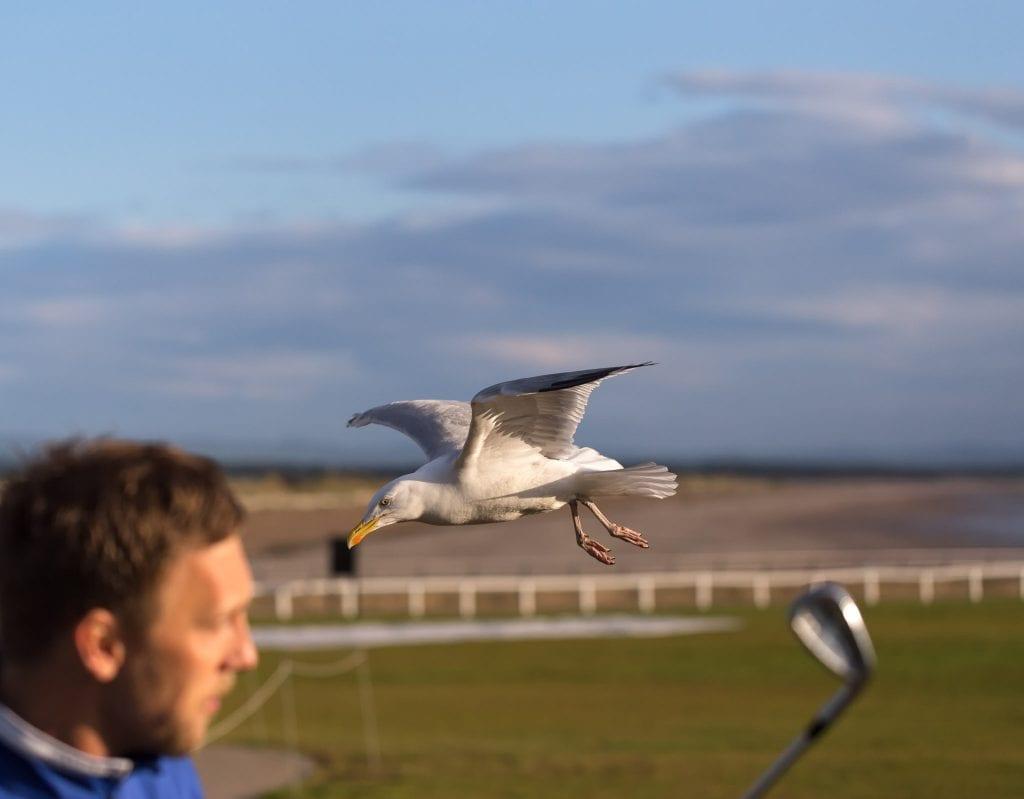 Killer Seagulls